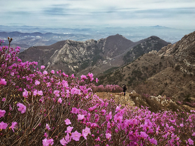 landscape-no-person-mountain-nature-flower picture material