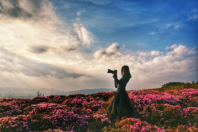 flower-landscape-sky-no-person-outdoors picture material