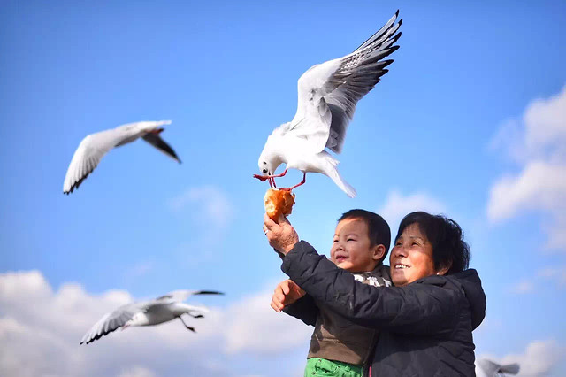 bird-freedom-outdoors-sky-seagulls picture material