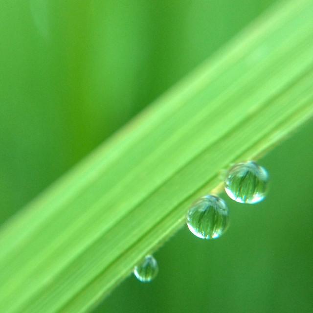dew-rain-droplet-drop-raindrop picture material