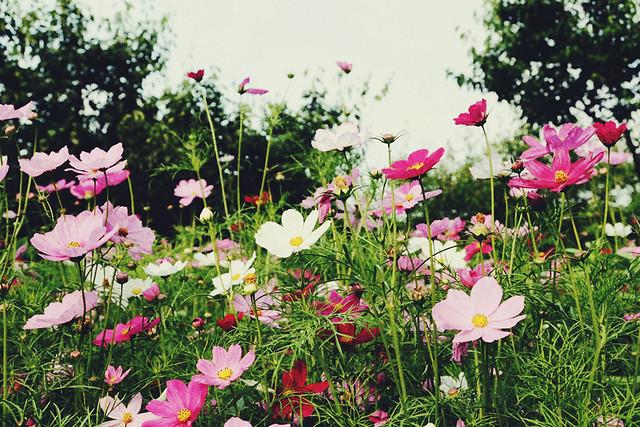 flower-nature-summer-flora-garden 图片素材