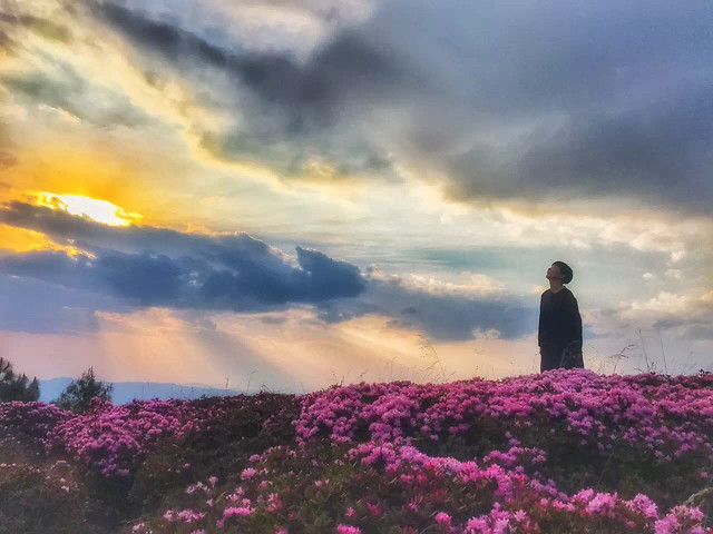 landscape-flower-no-person-sky-sunset picture material