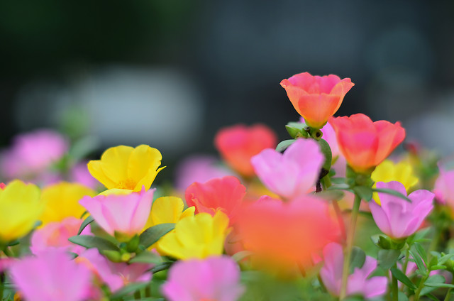 nature-summer-flower-no-person-leaf 图片素材