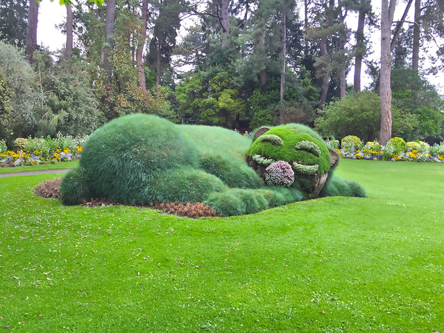 garden-grass-lawn-park-tree picture material