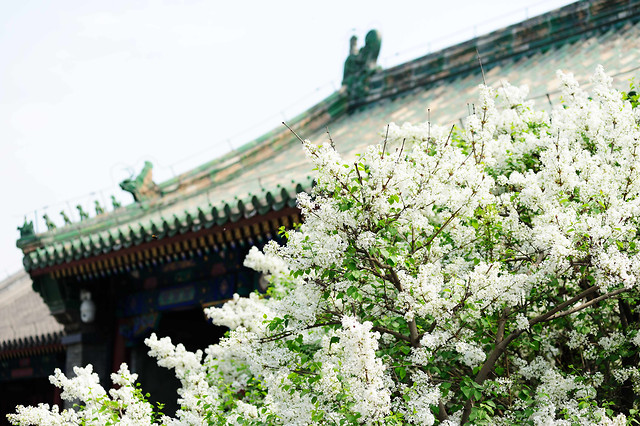 flower-garden-flora-blooming-tree 图片素材