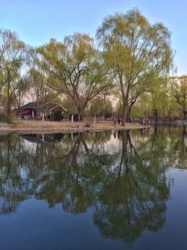 water-reflection-tree-lake-river 图片素材
