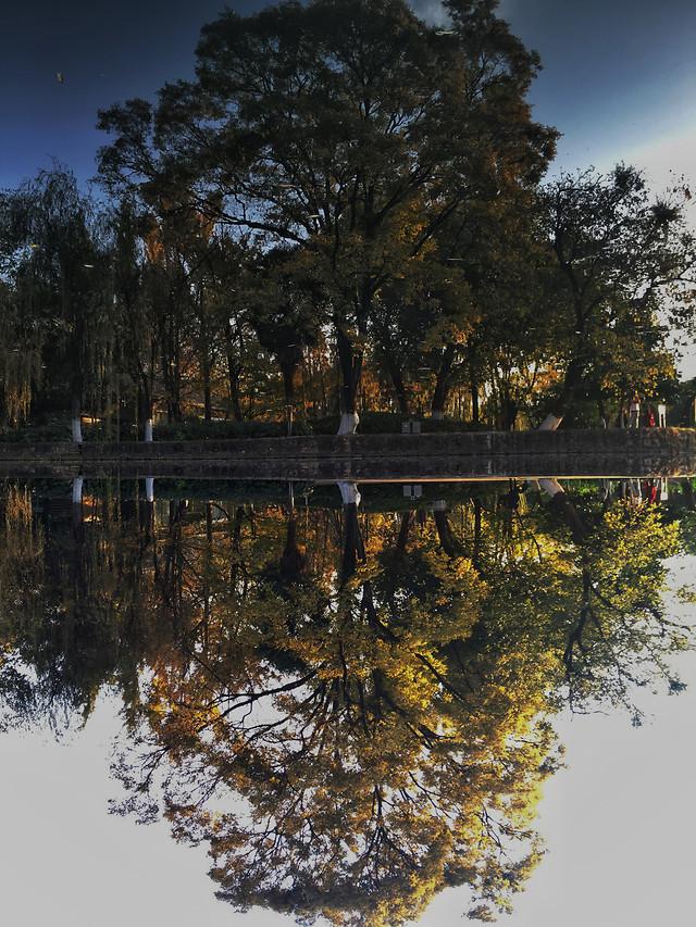 tree-reflection-nature-water-landscape 图片素材