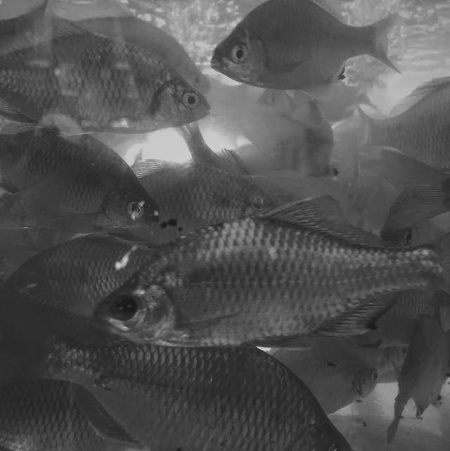 fish-underwater-no-person-sea-ocean picture material