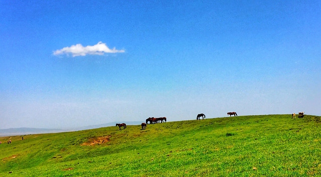 landscape-agriculture-farm-field-grassland picture material