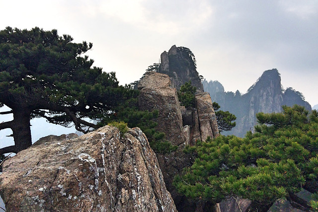 no-person-travel-landscape-tree-mountain picture material