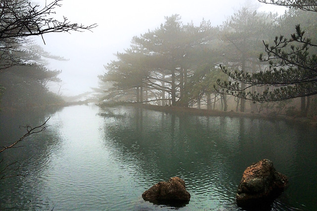 fog-water-landscape-tree-winter picture material