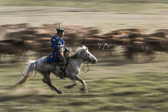 horse-hurry-rider-competition-fast picture material