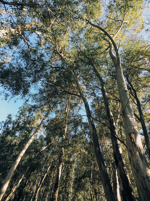 tree-natural-environment-forest-woody-plant-vegetation 图片素材