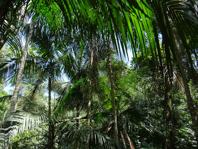 tropical-palm-coconut-tree-nature picture material