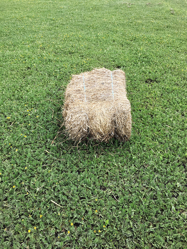 grass-lawn-growth-field-hayfield picture material