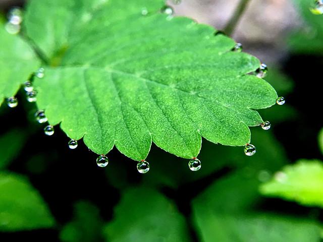 leaf-flora-rain-nature-environment picture material