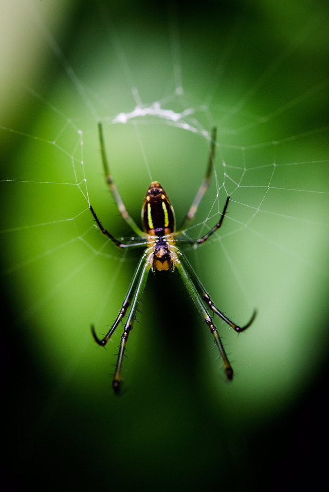 spider-insect-arachnid-nature-creepy picture material