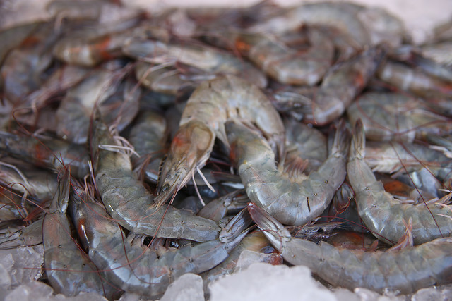 shrimp-seafood-crustacean-shellfish-food 图片素材