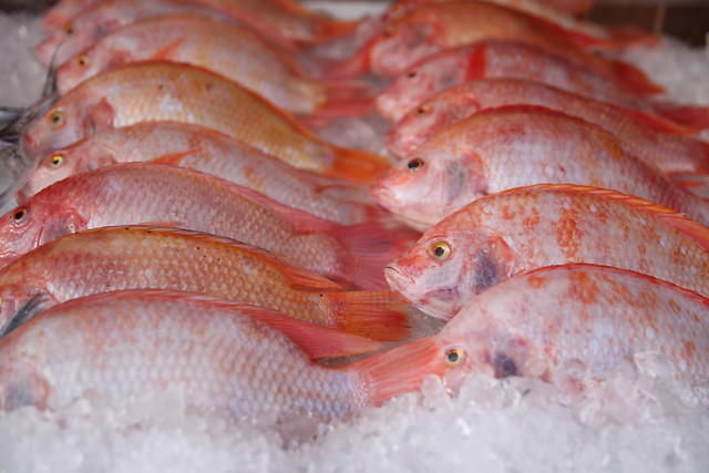 fish-seafood-market-sea-food 图片素材