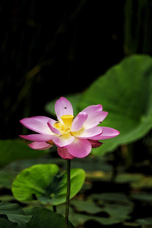 flower-nature-leaf-flora-plant 图片素材
