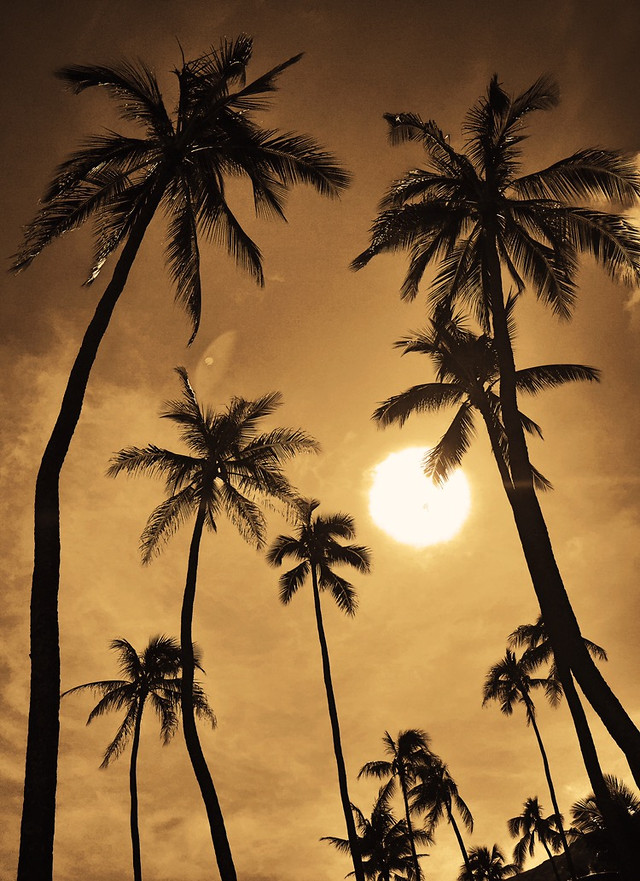 palm-beach-coconut-tropical-exotic picture material