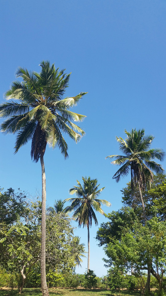 tree-palm-no-person-tropical-beach picture material