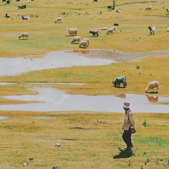no-person-agriculture-landscape-grassland-outdoors 图片素材
