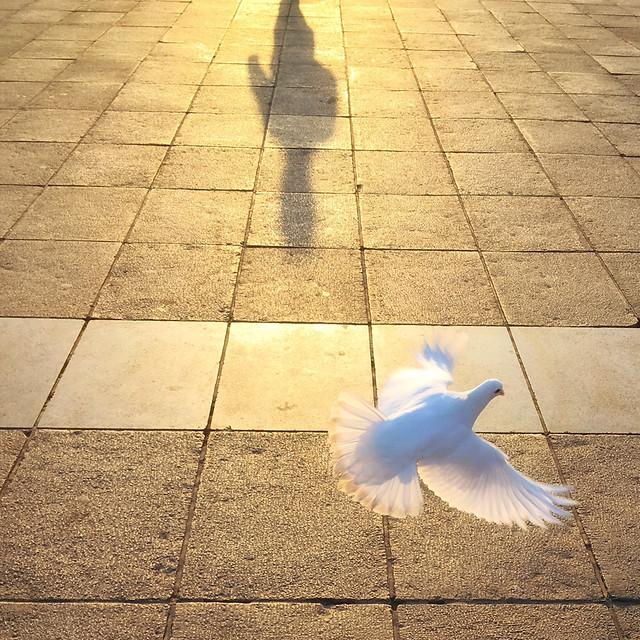 bird-pigeon-street-pavement-floor picture material
