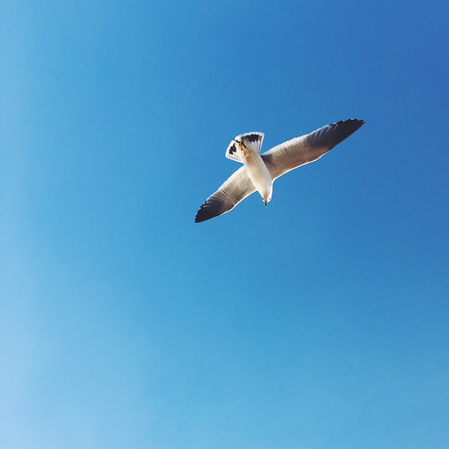 sky-freedom-outdoors-flight-bird picture material