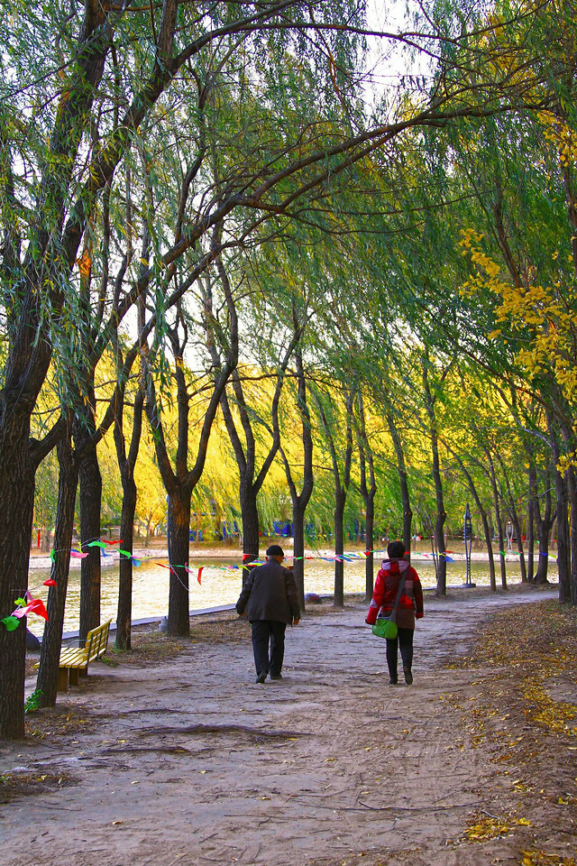 tree-landscape-park-environment-fall picture material