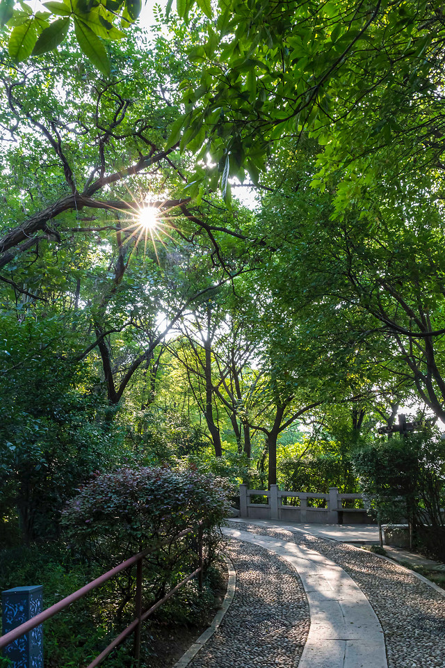 tree-road-guidance-leaf-landscape picture material