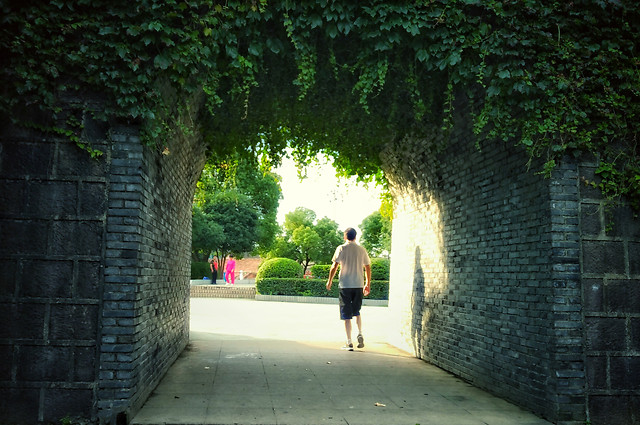 green-street-no-person-photograph-nature picture material