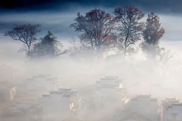 winter-snow-fog-landscape-mist picture material