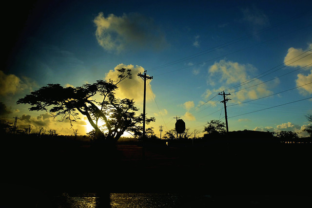 sky-nature-tree-cloud-evening picture material