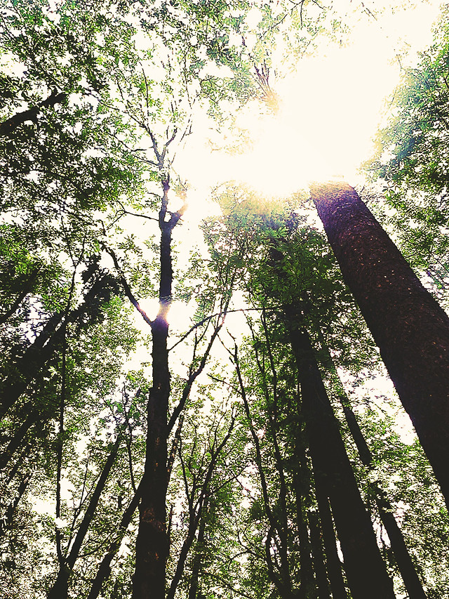 wood-tree-nature-landscape-park picture material