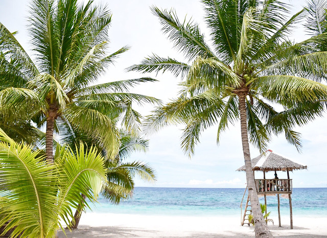 beach-tropical-palm-sand-paradise picture material