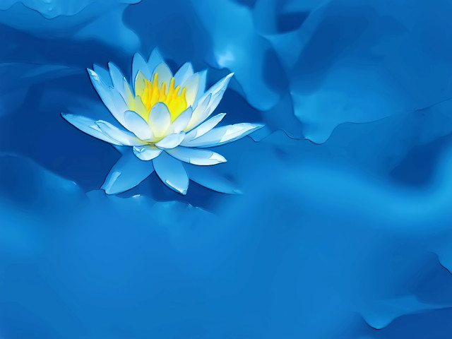 flower-water-flora-petal-lotus picture material