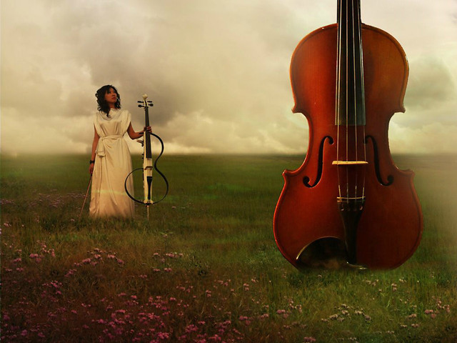 violin-grass-string-instrument-music-violin-family picture material