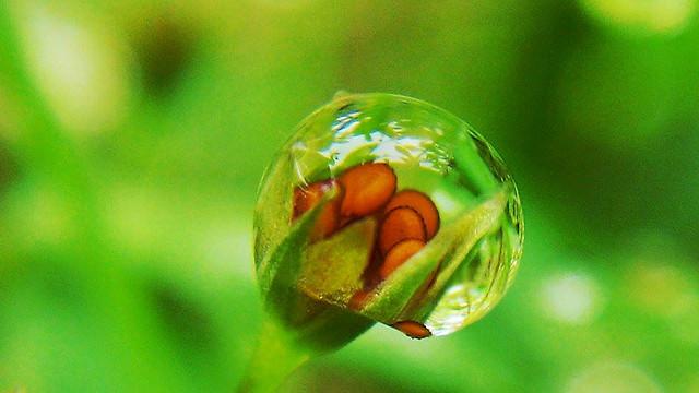leaf-nature-no-person-rain-h2o picture material