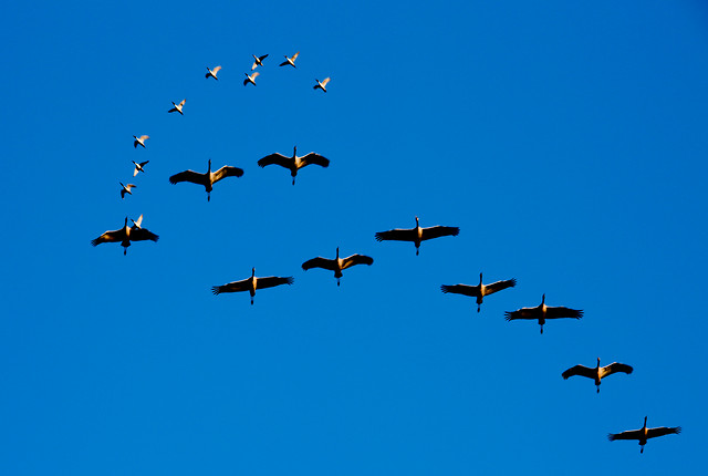 flight-bird-sky-airplane-flying picture material