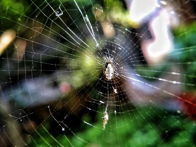 spider-spiderweb-spider-web-no-person-nature picture material
