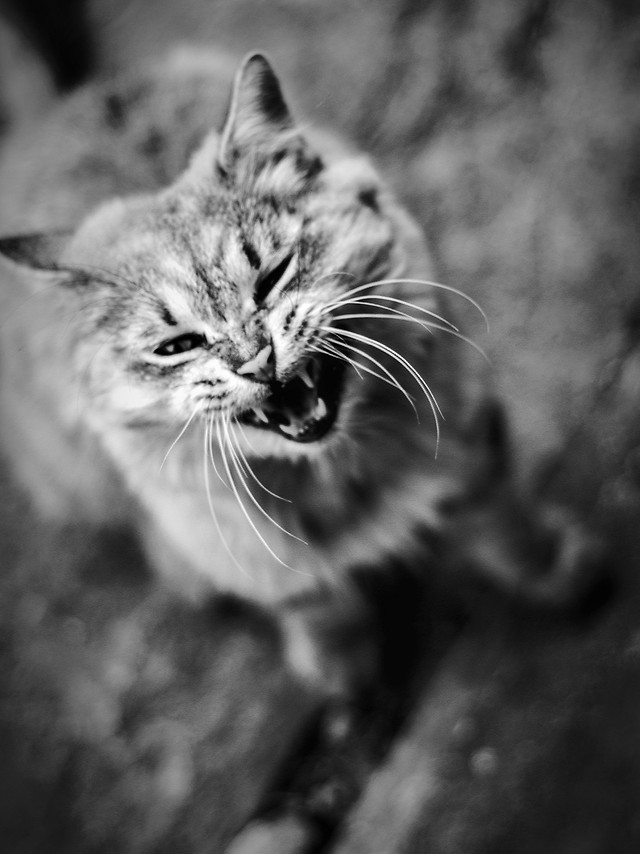 cat-portrait-animal-whiskers-nature picture material