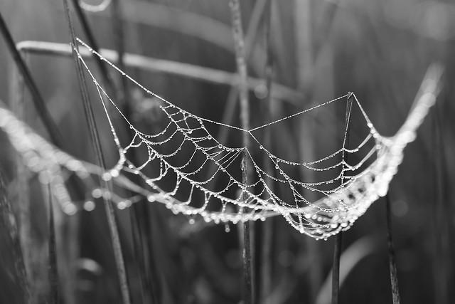 spider-web-spiderweb-cobweb-trap picture material