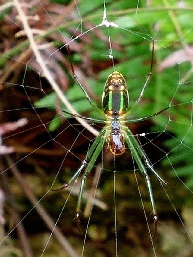 spider-arachnid-insect-nature-spiderweb picture material