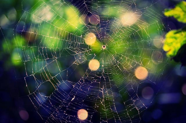 spider-spiderweb-cobweb-trap-web-together picture material