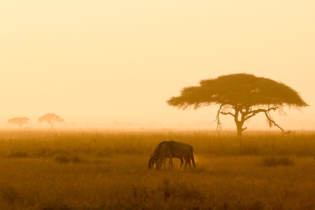 sunset-wildlife-dawn-savanna-grassland 图片素材