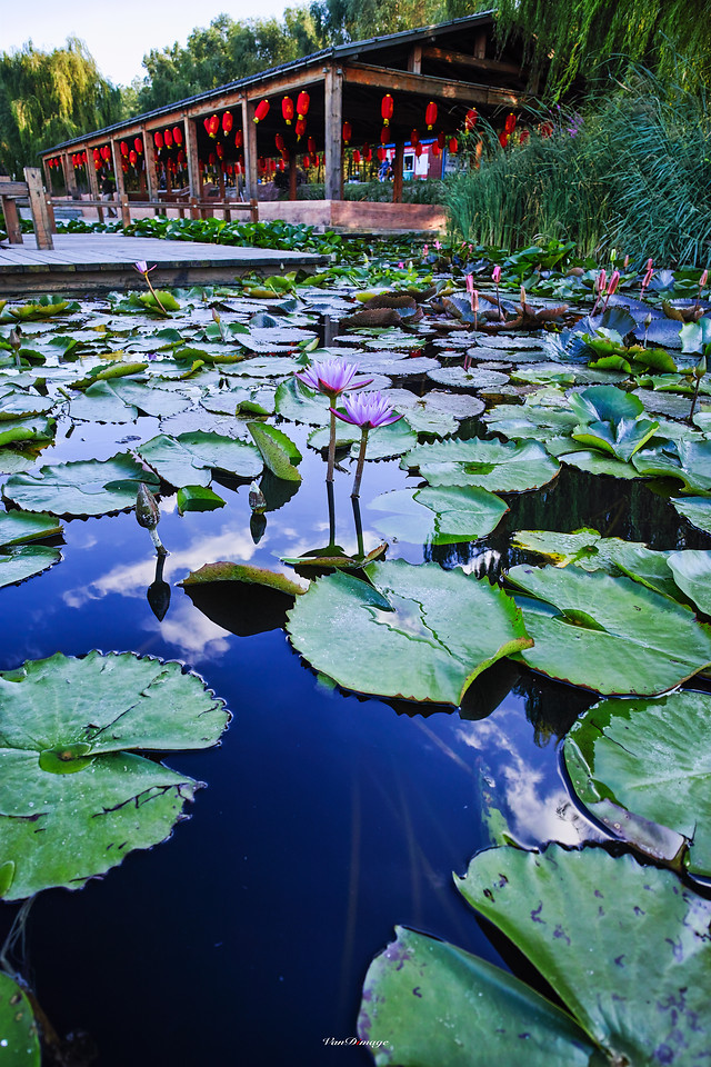 pool-water-lake-leaf-garden picture material