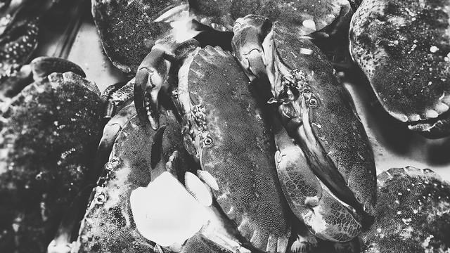 no-person-one-fish-seafood-black-white 图片素材