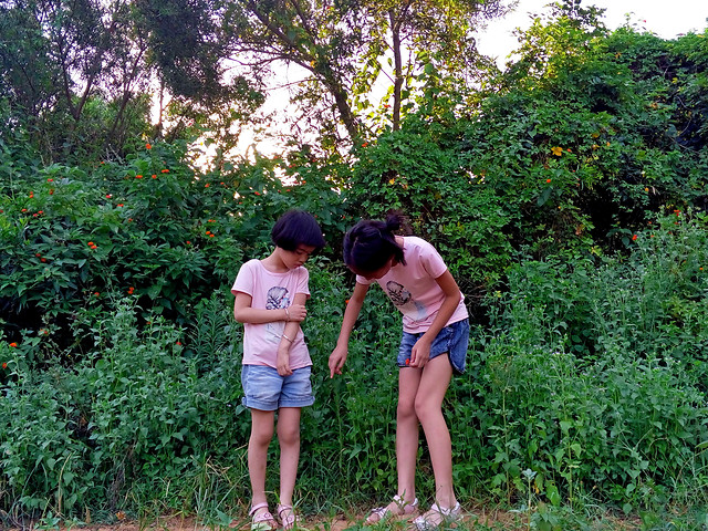 child-outdoors-nature-summer-girl picture material