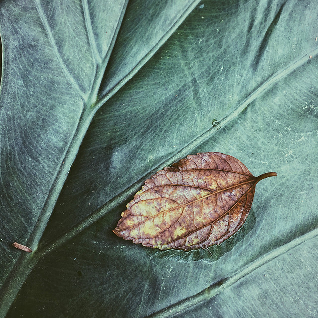 leaf-fall-flora-nature-texture picture material